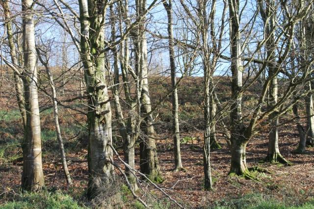 Hardy-Wood
