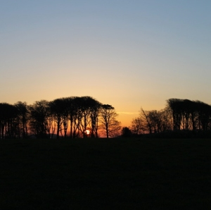 mandy-april-sunrise